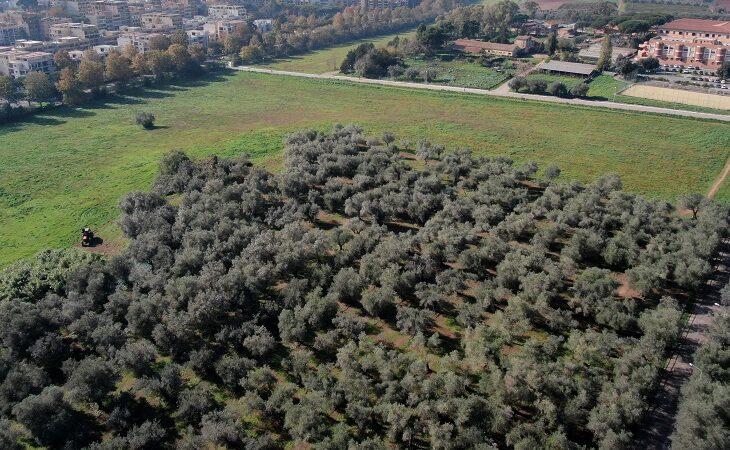 ITA Garibaldi Oliveto